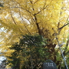 【Youtube更新】11月18日現在の紅葉の様子を動画でお楽しみください。