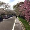 桜ライド Part2