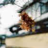 Photo Letter vol.20「冬の北兵庫と京都」