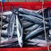 2021年5月25日 小浜漁港 お魚情報