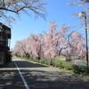 ひとり金沢散歩・・桜舞う犀川と、寺町界隈