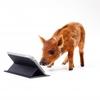iPad活用塾 第3回「知っておくと便利なこと」