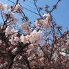 五反田の桜と隠れ絶景スポットを発見!!
