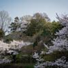 【写真】最近の写真撮影(2018/4/1)明石公園その1