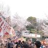 上野桜3本勝負