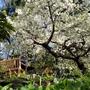 白妙桜の周辺