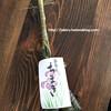 【京都のおすすめお土産】創業文政年間 祇園饅頭の限定ちまきと柏餅(感想レビュー)