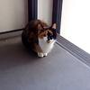 三毛猫「三色丼」の朝の挨拶「おはよう」