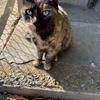 猫がなぜニャーと鳴くかチコちゃんが解説 かわいすぎる理由にネット民興奮