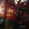 オールドレンズで撮る鎌倉の紅葉