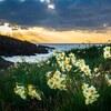 唐音水仙公園で夕日を撮る