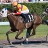 【シリウスS】ミツバ「長くいい脚を使う馬で鞍上も手の内に入れている」