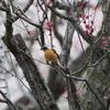 雨のため撤退を余儀なくされる(大阪城野鳥探鳥 20200222 6:20-10:25)