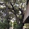 中野区立歴史民俗資料館の庭園にある茶室、椎の木、民具など(2020年10月)