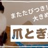 【ねこの本音 #36】