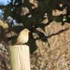 都立公園雑木林のあかの鳥たち