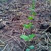総出の草刈りや肥料の散布など