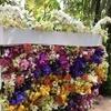 アフリカ・中南米・東南アジアの麗しき蘭たち ー旅するラン展@牧野植物園ー