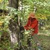落葉広葉樹の葉枯らし&新月伐採