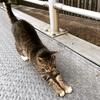 猫背では 腹式呼吸が できません