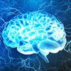 悪条件に遭遇しないと、進化が起こらない ◆ 「ブッダの瞑想と脳科学」