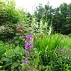 ミモザ・ガーデンの日記ー風のガーデン