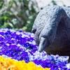 【写真】最近の写真撮影(2017/3/20)鶴見緑地公園その2