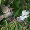 2019年8月25日の鳥撮り-北区