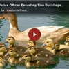 This Houston Police Officer Escorting Tiny Ducklings to Safety is Just Too Cute