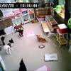 ホテル犬・お預かり犬 ライブアニメーション 2017年7月28日 AM10:00頃