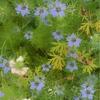 そろそろNikon1・・・(8) 1 NIKKOR 30-110mm / F3.8-5.6 VRで植物を撮ってみた