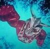 【ウルトラマンレオ】1974年の今日放映スタート👍  #ウルトラマンレオ #円谷プロ #ウルトラシリーズ