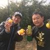 藤田くんがやってきた!湘南ゴールドの収穫