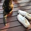 スニーカーを履いた猫🐾