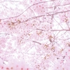 決意の五行歌コラム vol4