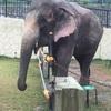 【沖縄市】動物園&知育施設の「沖縄こどもの国」に行ってきました【写真多めのレポ】