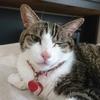 糖尿病猫退院するも2度めの危機