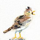鳥になっちゃうブログ