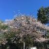 桜の見頃が終了そして・・・