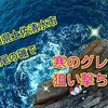 2日目もグレが爆釣!!松尾の湾内磯カシラゴもヤベ~よww(動画もあるよ~)