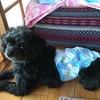 【ゆる記事】私の愛する実家の犬。あむ♡