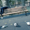 久々のバカゲー登場。『Pigeon Simulator』で、ハトの生活を楽しもう