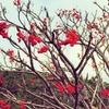 色づく木々とじわじわ近づく冬本番