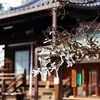 道明寺天満宮の初詣2017。混雑具合と屋台(露店)の出店情報。