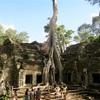 アンコール遺跡見て歩き#17(巨樹と神秘性のタ・プローム)
