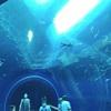滋賀の本気!リニューアル中の琵琶湖博物館のクオリティが高すぎる!!おまけに小中学生は無料!!(その1)