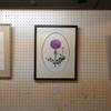 小島万里子先生のボタニカルアート教室の展覧会2