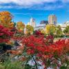 iPhone7で東京ミッドタウン裏「檜町公園」の紅葉スナップ