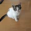 今日は何の日?保護猫の日(●´ω`●)。