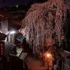 京都・東山 - しだれ桜微笑む産寧坂